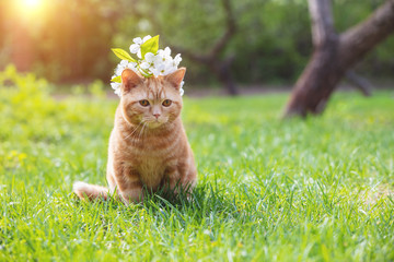 Portrait of a little kitten with cherry flowers on the head. The cat sits in a spring garden Fototapete