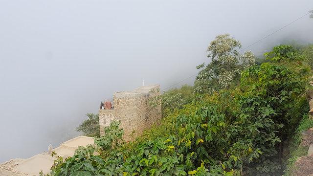Rural Yemen coffee fields