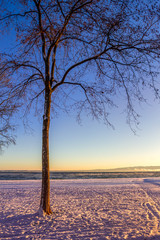 Foto auf AluDibond Aubergine lila Bare Tree On Snow Covered Landscape Against Clear Sky