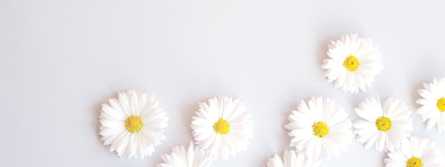 Banner for the site with camomile flowers on a gray background.