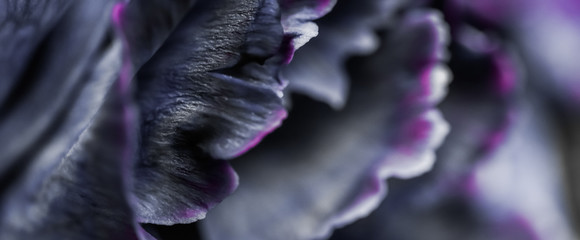 Abstract floral background, black carnation flower. Macro flowers backdrop for holiday brand design