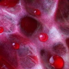 Zbliżenie na fragment owocu granatu