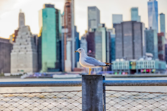 Seagull on the Brooklyn Bridge Park fence in front of the Manhattan panorama