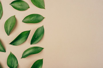 Natural background created from fresh green leaves. Flat lay. Nature concept.