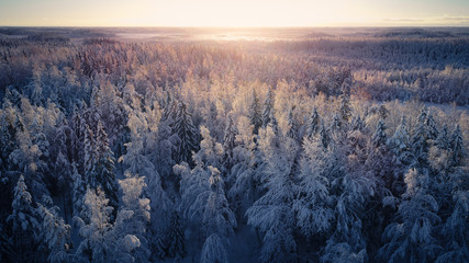 Fototapeta Scenic View Of Forest During Winter