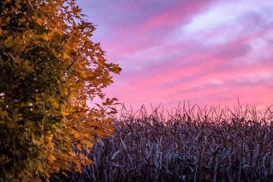 Autumn sunset over the cornfield