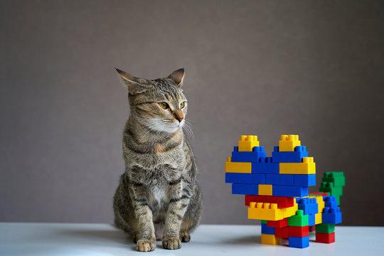 the cat is alive and cat designer