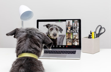Dogs Holding Web Video Conference Call