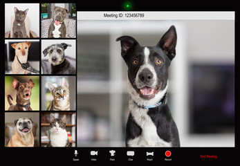 Pets Working From Home Video Conference