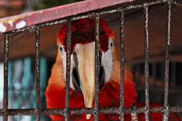 Portrait Of Green Bird In Cage