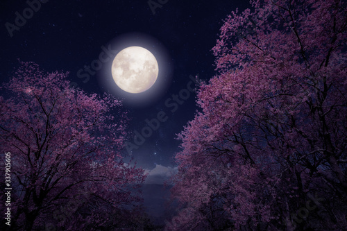 Wall mural Romantic night scene - Beautiful cherry blossom (sakura flowers) in night skies with full moon. fantasy style artwork with vintage color tone.