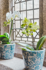 Close-up Of Flowering Pots On Window Sill At Home