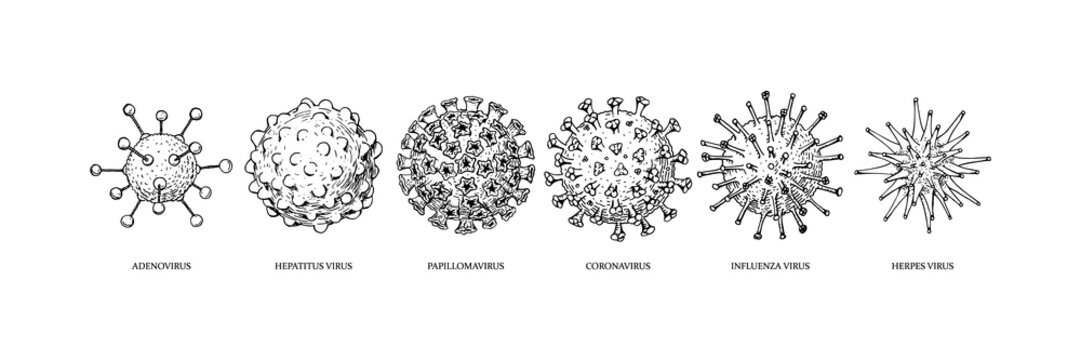 Set of hand drawn viruses types (coronavirus, papillomavirus, herpes, influenza, hepatitis, adenovirus) with names in sketch style. Microscope virus close up. Vector illustration. COVID-2019
