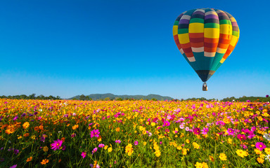 Canvas Prints Balloon Beautiful colors of the hot air balloons flying on the cosmos flower field