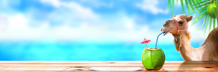 Tropical beach island with a camel drinking coconut juice. Cool header banner for your website or business ads.