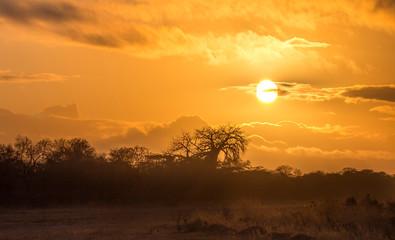 Fototapeta Silhouette Trees On Landscape Against Sky During Sunset