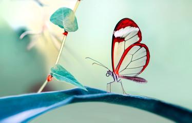 Garden Poster Butterfly Closeup beautiful butterfly in a summer garden