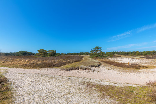 Naturschutzgebiet Dünenheide auf der Insel Hiddensee