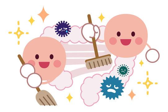 腸内を掃除する善玉菌