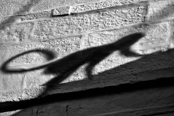 Foto op Aluminium Aap Silhouette / shadow of a monkey sneaking into people's houses