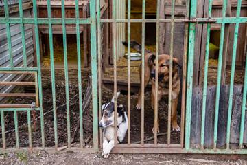 Fototapeta dog in a cage