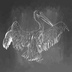 Pelican icon. Hand drawn vector illustration isolated on chalkboard background. White realistic sketch on blackboard and chalkboard imitation