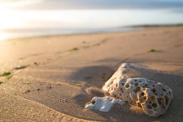 Foto auf Gartenposter Lachs ocean