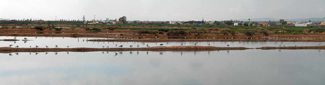 Seagulls lined up in the lagoon of Castro Marim, Algarve