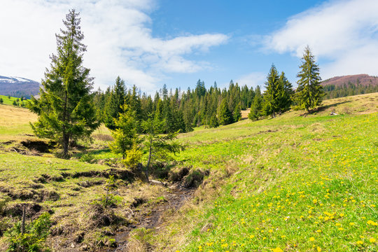 beautiful mountain landscape in springtime. trees on the grassy meadow. small brook in the valley. forested hills on the distant ridge with snow capped tops. idyllic scenery