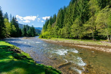 river scenery among the forest in mountains. beautiful alpine landscape in spring. Synevyr National park is a popular destination of Ukrainian Carpathians. calm water flow with stones on the shore