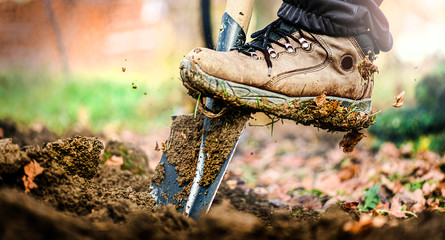 Man boot or shoe on spade prepare for digging. Farmer digs soil with shovel in garden
