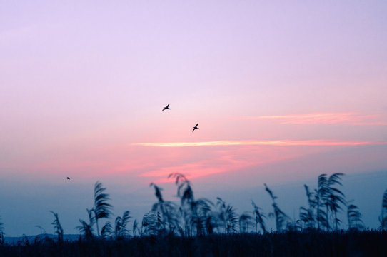 Vögel im Morgengrauen