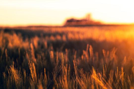 Weizen Feld bei Sonnenuntergang