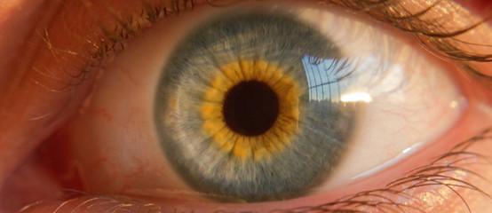 Close-up Portrait Of Human Eye