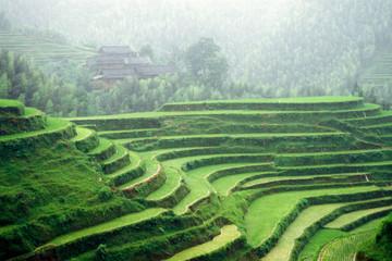 Fotobehang Rijstvelden Terraced rice fields, Longshen near Guilin, Guangxi Province, People's Republic of China