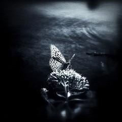 Printed kitchen splashbacks Butterflies in Grunge Close-up Of Butterfly On Flower