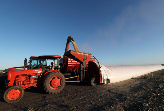 A truck unloads soy grains in a silo bag on a farmland in Chivilcoy, on the outskirts of Buenos Aires