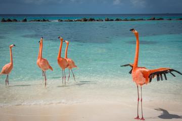 Canvas Prints Flamingo Flamingos am Strand auf Aruba
