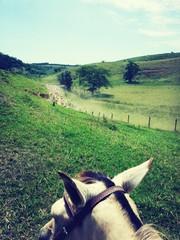 Foto auf Gartenposter Olivgrun Cropped Horse On Countryside Landscape