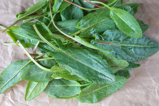 Young green leaves of sorrel on craft paper. Useful vegetable culture and medicinal plant Rumex acetosa, rich in vitamins and minerals. Close-up.