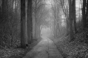 Keuken foto achterwand Weg in bos Narrow Walkway Along Trees In Forest