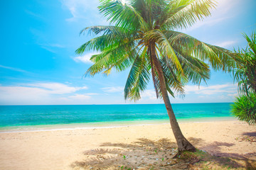 Foto auf AluDibond Palms beach and coconut palm tree