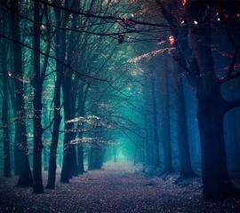 Keuken foto achterwand Weg in bos Long Walkway Along Trees In Forest