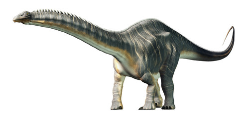Apatosaurus was a sauropod dinosaur. A herbivore, it lived in during the Late Jurassic Period in what is now North America. On a white background. 3D Rendering Wall mural