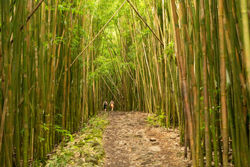 Hikers on the Pipiwai Trail through the bamboo forest