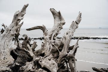 Fototapeta driftwood on beach obraz