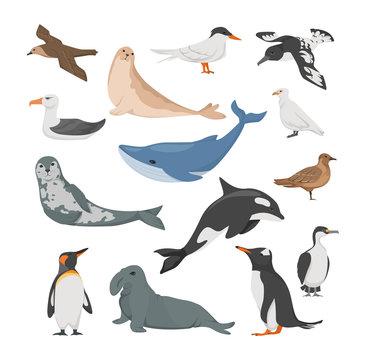 Antarctica flora. Animals, birds and sea life. Seal, petrel, penguins, albatross, blue whale, sea leopard, cape Dove, white plover, antarctic tern blue-eyed cormorant vector illustration
