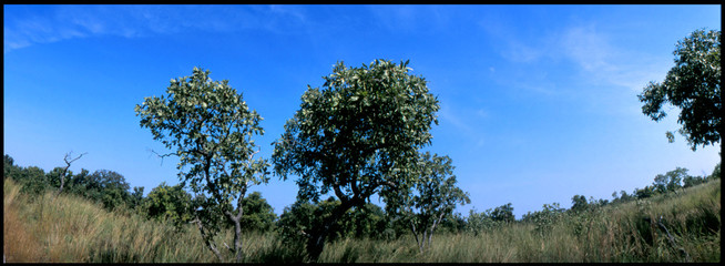 Fototapeten Khaki Trees On Countryside Landscape