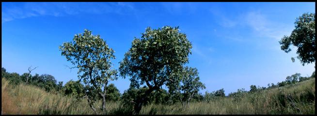 Foto auf Gartenposter Khaki Trees On Countryside Landscape