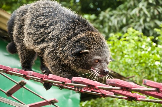 Low Angle View Of Bear Cat In Zoo